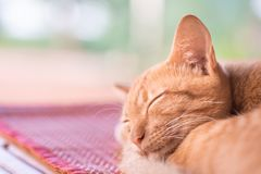 Gato del jengibre que duerme en la estera foto de archivo libre de regalías