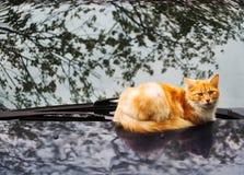 Gato del jengibre que miente en capo del coche imagenes de archivo