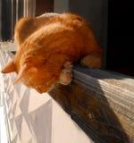 Gato del jengibre que mira a escondidas del balcón Fotos de archivo