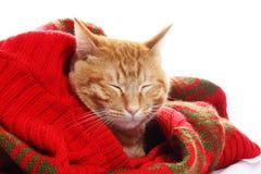 Gato del jengibre y suéter rojo foto de archivo