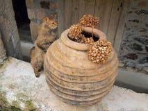 Gato del monasterio Fotos de archivo