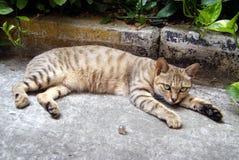 Gato del ocio Fotos de archivo libres de regalías
