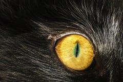 Gato del ojo Fotografía de archivo libre de regalías