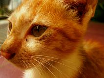 Gato del ojo Foto de archivo