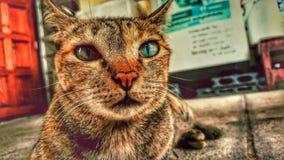 Gato del ojo verde Imagen de archivo libre de regalías