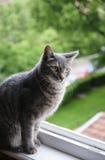 Gato del ojo verde Imagenes de archivo