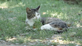 Gato del país en la hierba almacen de video