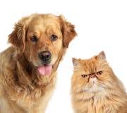 Gato del perro y del jengibre Fotografía de archivo libre de regalías