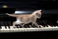 Gato del piano Imagenes de archivo