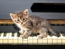 Gato del piano Músico, música Foto de archivo