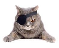 Gato del pirata imagen de archivo libre de regalías