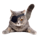 Gato del pirata foto de archivo