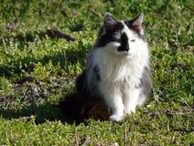 Gato del pueblo Foto de archivo