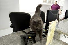 Gato del recepcionista Fotografía de archivo libre de regalías