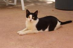 Gato del rescate Fotografía de archivo