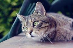 Gato del retrato Imagen de archivo libre de regalías