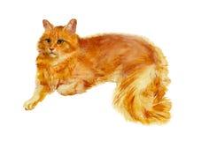 Gato del rojo de la acuarela Foto de archivo