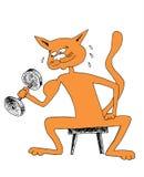 Gato del rojo del levantamiento de pesas Foto de archivo libre de regalías