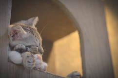 Gato del sueño fotos de archivo libres de regalías