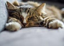 Gato del sueño de domingo Foto de archivo