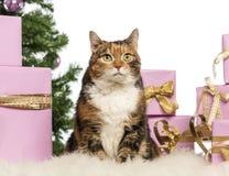 Gato delante de decoraciones de la Navidad Foto de archivo