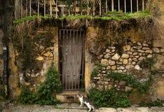 Gato delante de la casa abandonada fotografía de archivo
