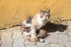 gato delante de la pared ocre foto de archivo libre de regalías