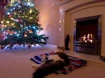 Gato delante de un fuego en la Navidad Foto de archivo