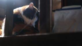 Gato dentro de la casa antigua por la mañana almacen de video