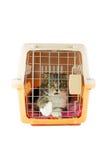 Gato dentro de uma caixa do portador do gato Imagens de Stock
