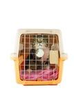 Gato dentro de uma caixa do portador do gato Fotografia de Stock
