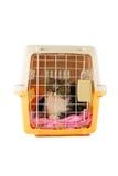Gato dentro de uma caixa do portador do gato Foto de Stock
