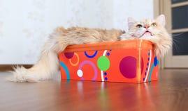 Gato dentro de una caja Imagen de archivo