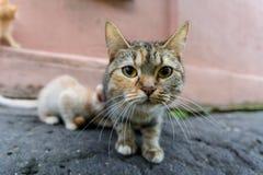 Gato desabrigado fotografia de stock