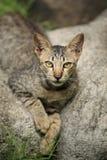 Gato desabrigado fotos de stock