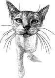 Gato desabrigado ilustração do vetor