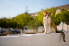 Gato desabrigado Imagem de Stock Royalty Free