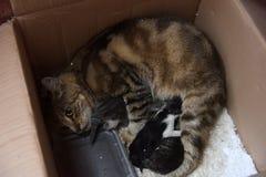Gato desabrigado com gatinhos em uma caixa na rua Imagens de Stock Royalty Free