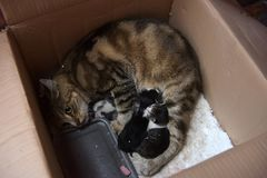 Gato desabrigado com gatinhos em uma caixa na rua Imagens de Stock