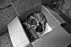 Gato desabrigado com gatinhos em uma caixa na rua Imagem de Stock