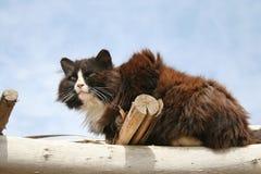 Gato desabrigado em um acampamento abandonado Imagens de Stock