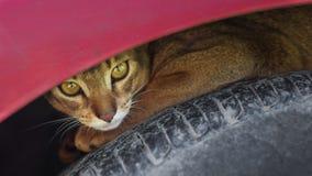Gato desabrigado fora Imagens de Stock Royalty Free