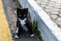 Gato desabrigado na estrada Fotografia de Stock Royalty Free