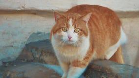 Gato desabrigado problema desabrigado dos animais de estimação dos animais o ruivo do gato da rua senta a congelação no estilo de vídeos de arquivo