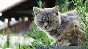 Gato desabrigado só que senta-se na rua vídeos de arquivo
