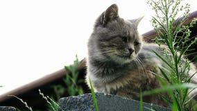 Gato desabrigado só que senta-se na rua video estoque