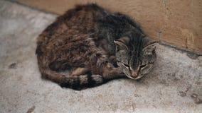 Gato desabrigado sonolento que senta-se perto da casa Vista patético Animal desabrigado video estoque