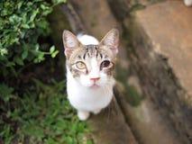 Gato desamparado Imagenes de archivo