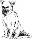 Gato desenhado mão Imagens de Stock