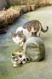 Gato detective Foto de archivo